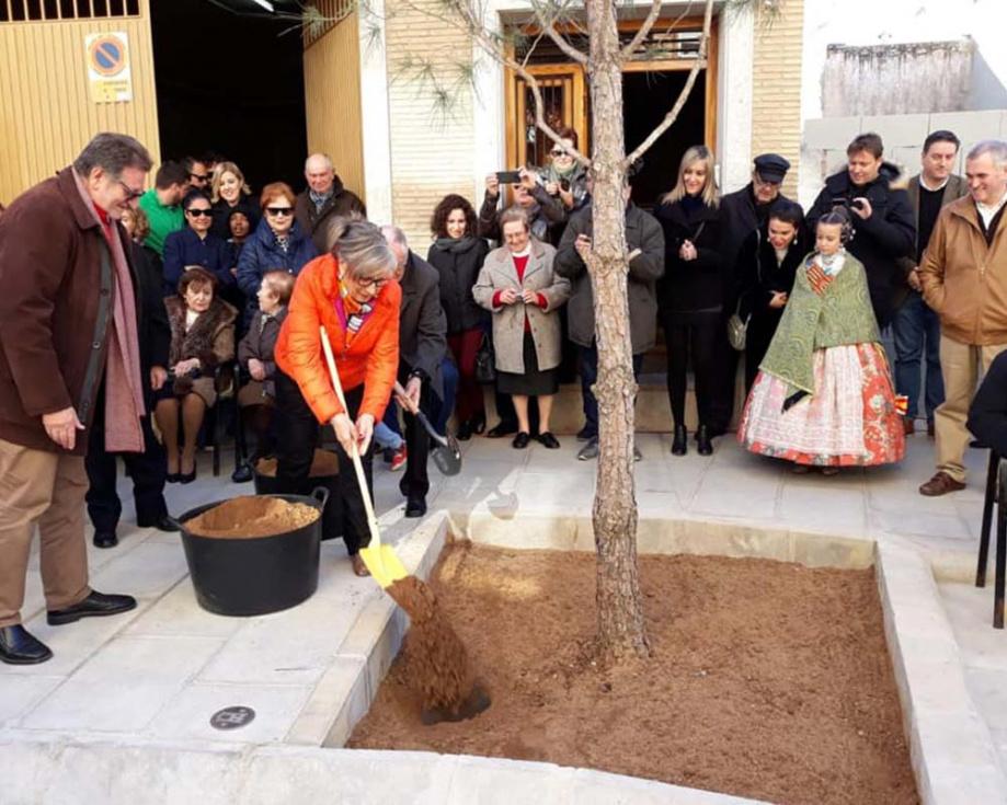 El carrer de la Mare de Déu de l'Olivar recupera el seu tradicional pi