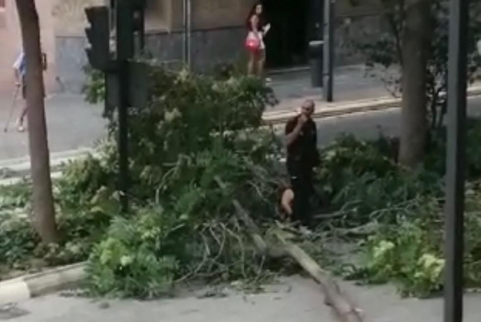 Ferida lleu en Torrent una dona a la que caigué una branca de 7 metres en l'Avinguda