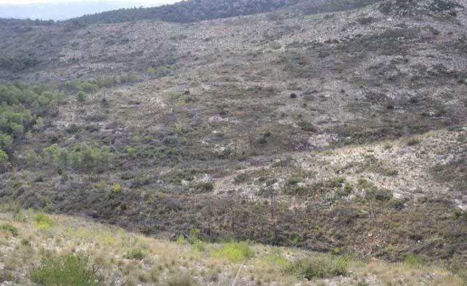 Jornada reforestació en la Serra Perenxisa en el mes del Medi ambient